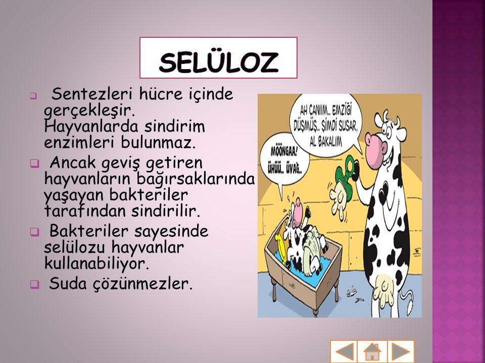 Selüloz Sentezleri hücre içinde gerçekleşir. Hayvanlarda sindirim enzimleri bulunmaz.
