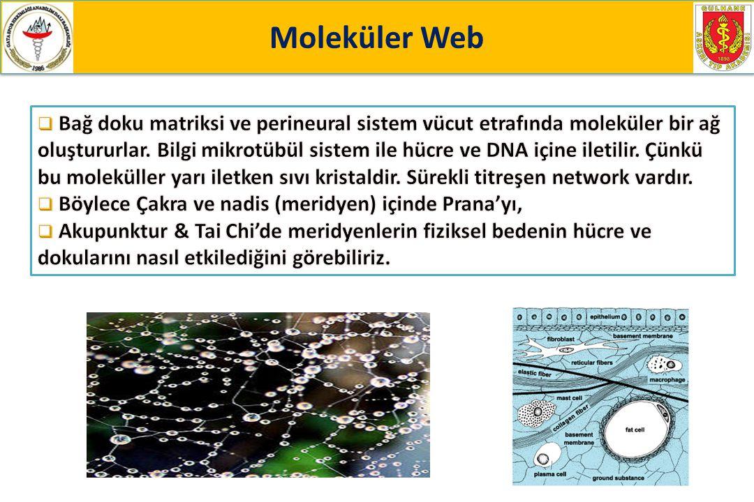 Moleküler Web Moleküler Web