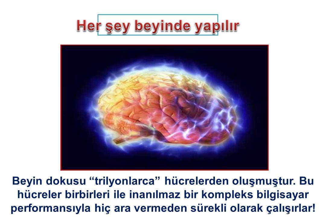 Her şey beyinde yapılır