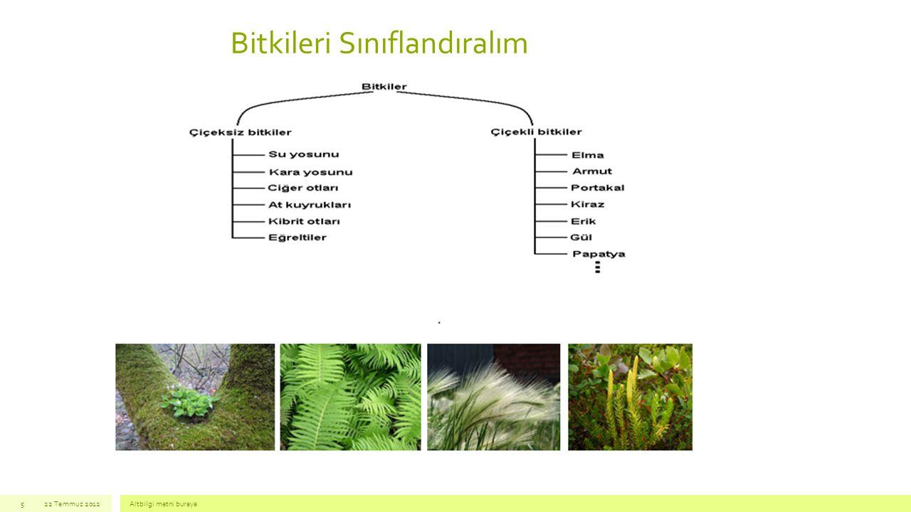 Bitkileri Sınıflandıralım