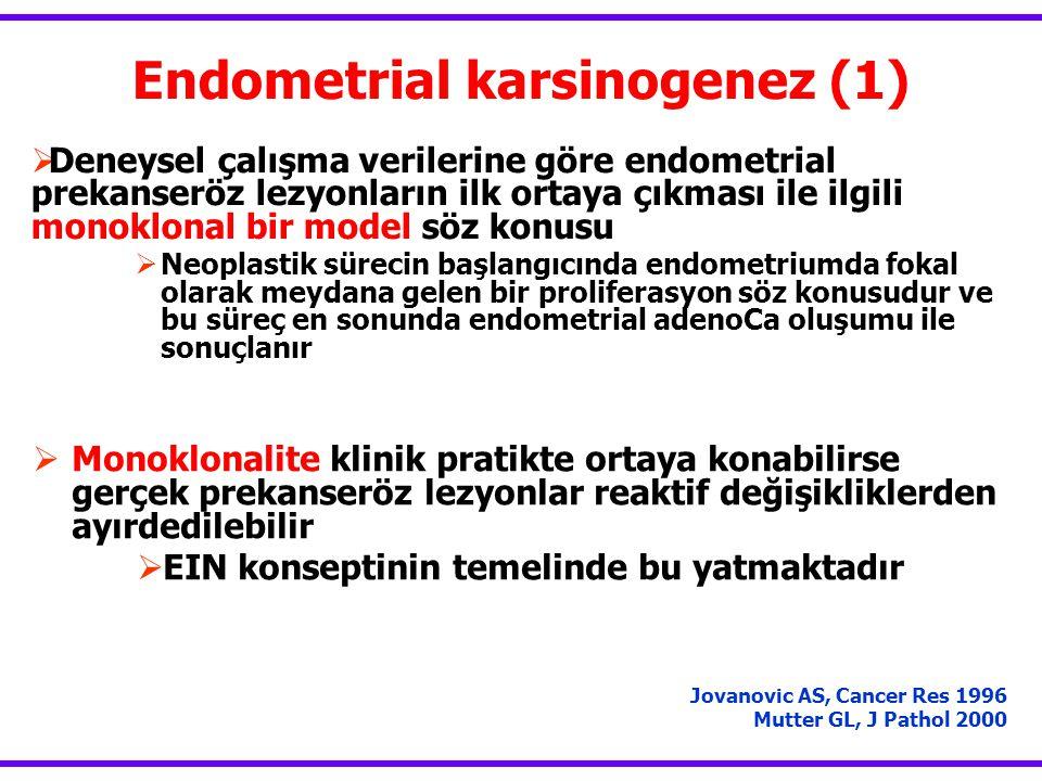 Endometrial karsinogenez (1)