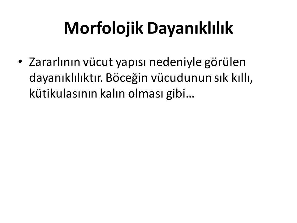 Morfolojik Dayanıklılık