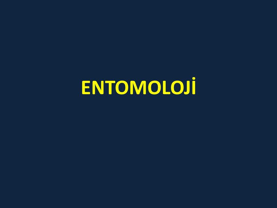 ENTOMOLOJİ