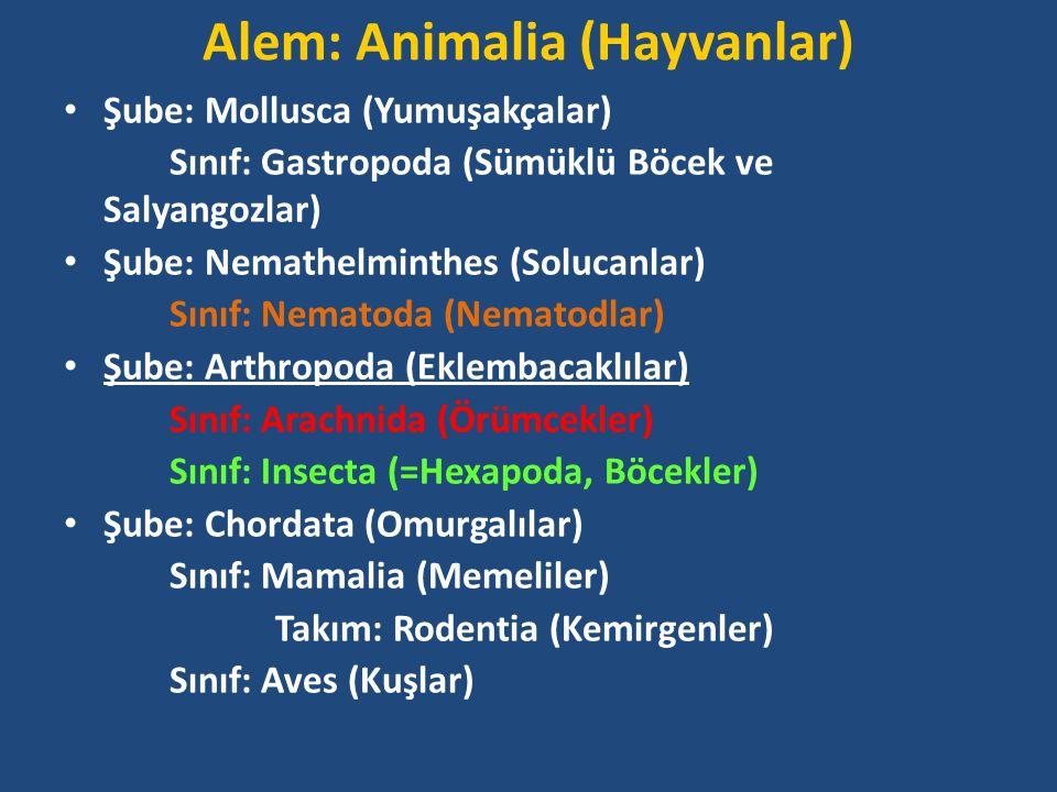 Alem: Animalia (Hayvanlar)