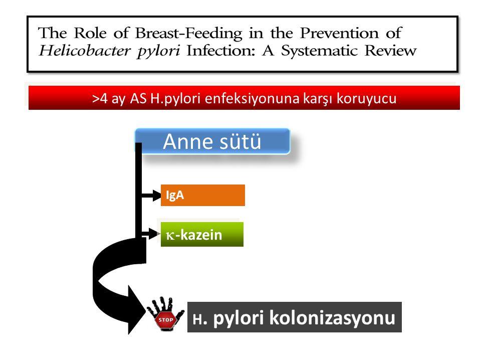 >4 ay AS H.pylori enfeksiyonuna karşı koruyucu