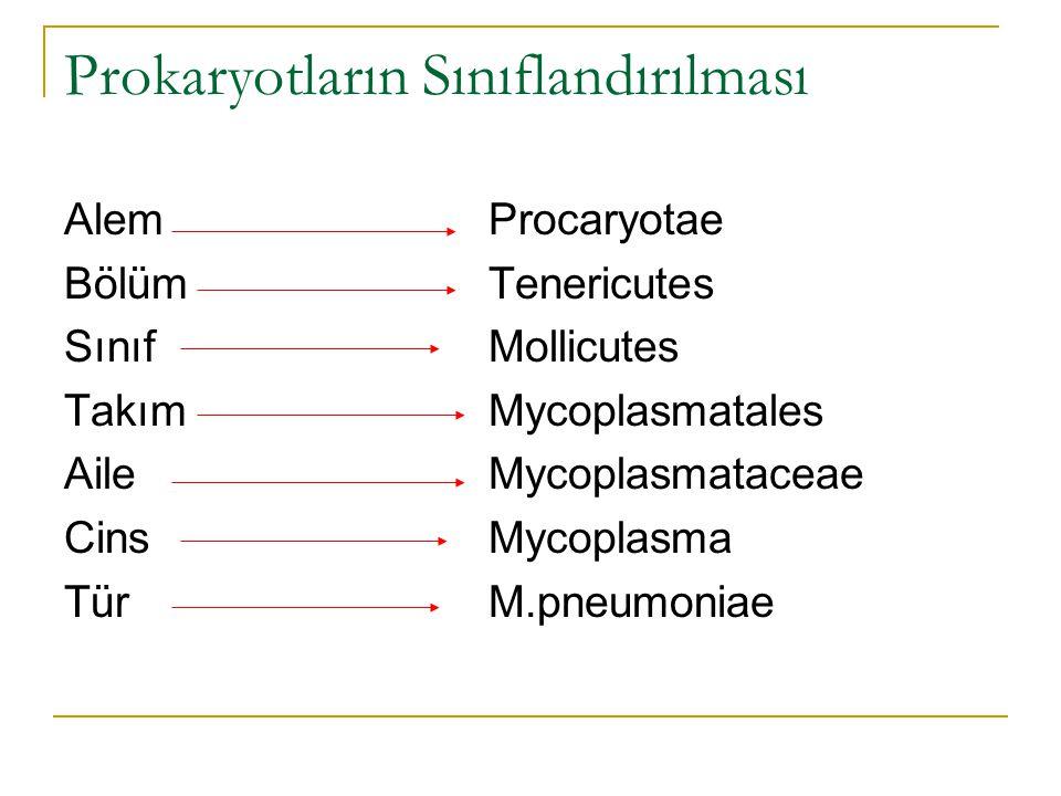 Prokaryotların Sınıflandırılması