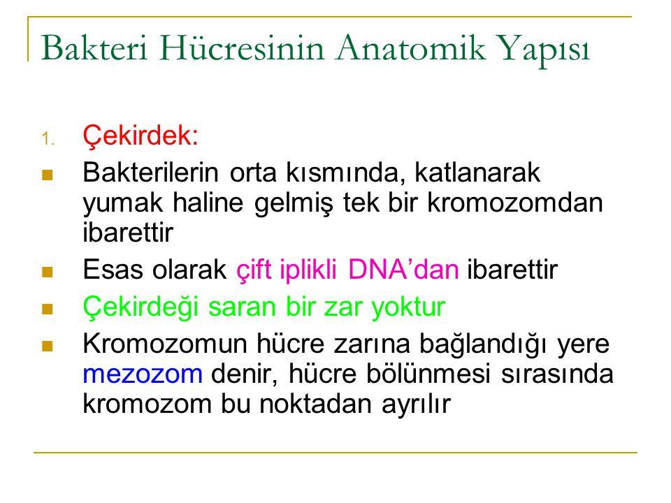 Bakteri Hücresinin Anatomik Yapısı