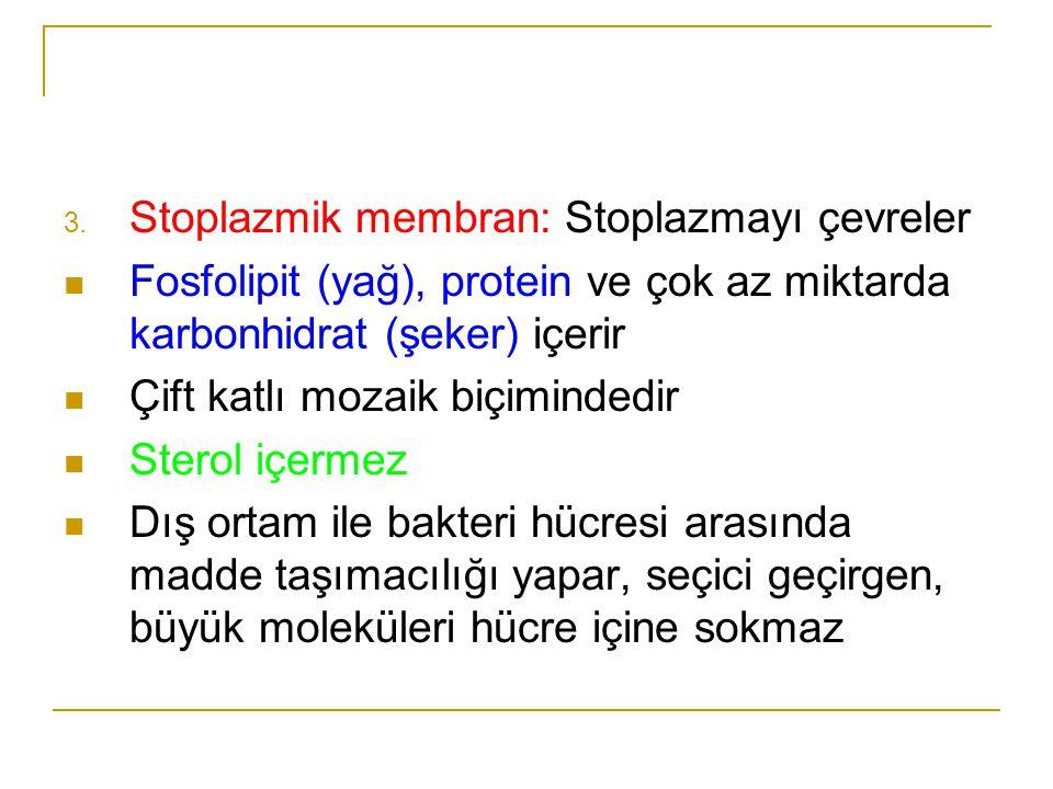 Stoplazmik membran: Stoplazmayı çevreler