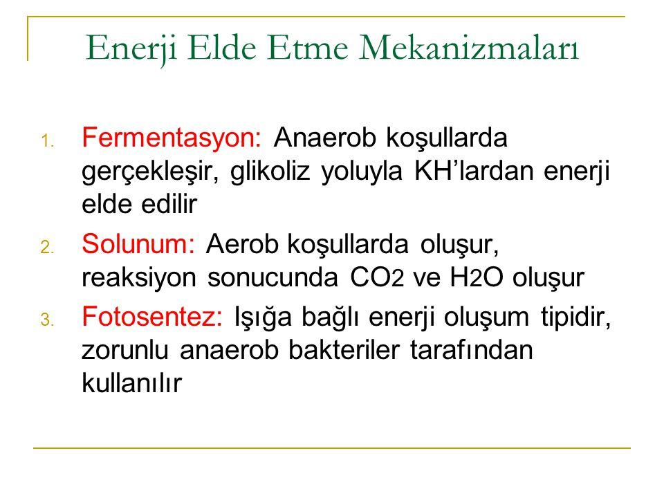 Enerji Elde Etme Mekanizmaları