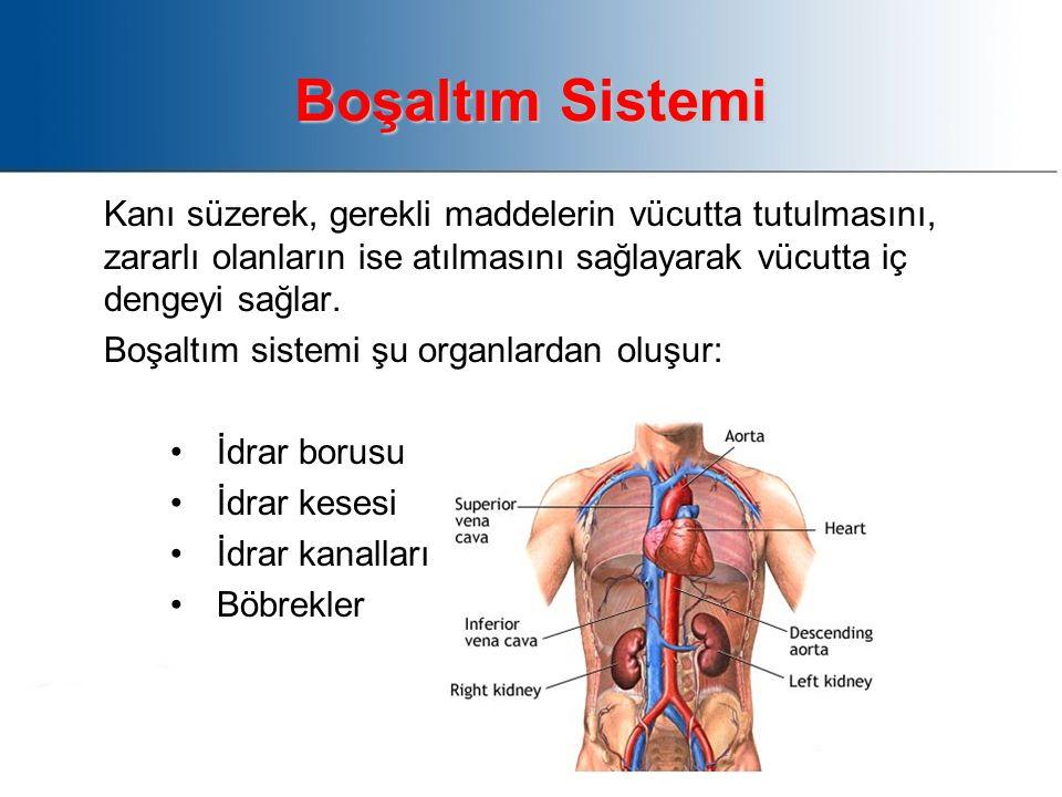 Boşaltım Sistemi Kanı süzerek, gerekli maddelerin vücutta tutulmasını, zararlı olanların ise atılmasını sağlayarak vücutta iç dengeyi sağlar.