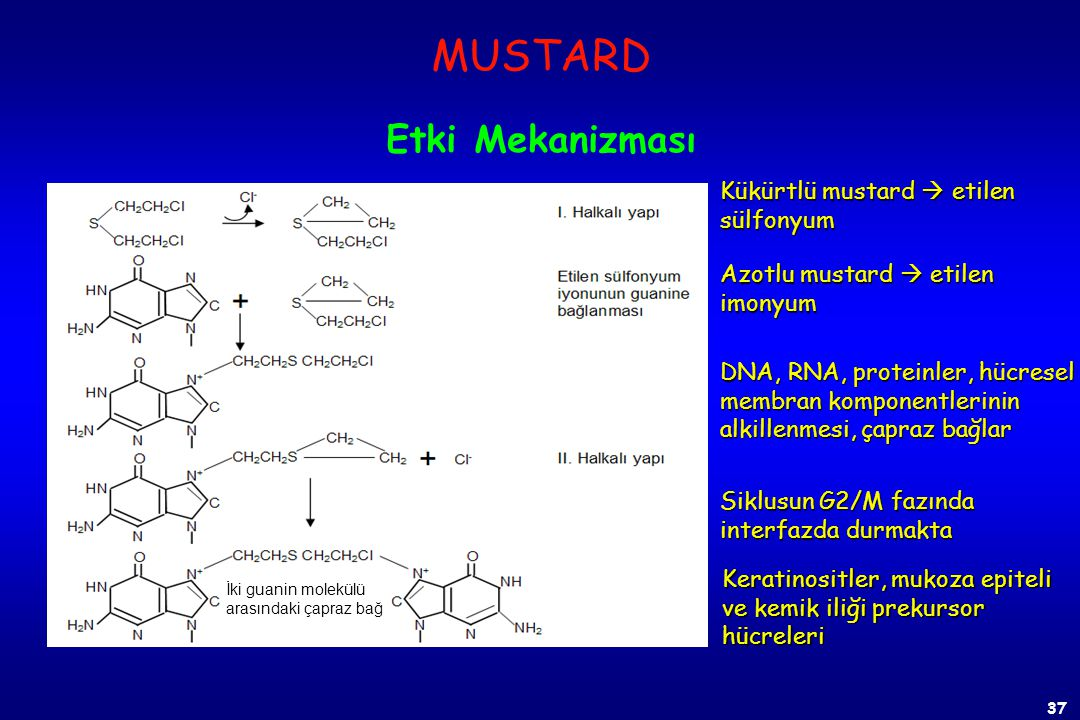 MUSTARD Etki Mekanizması Kükürtlü mustard  etilen sülfonyum