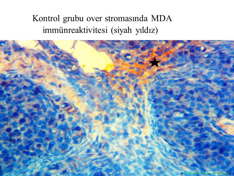Kontrol grubu over stromasında MDA immünreaktivitesi (siyah yıldız)