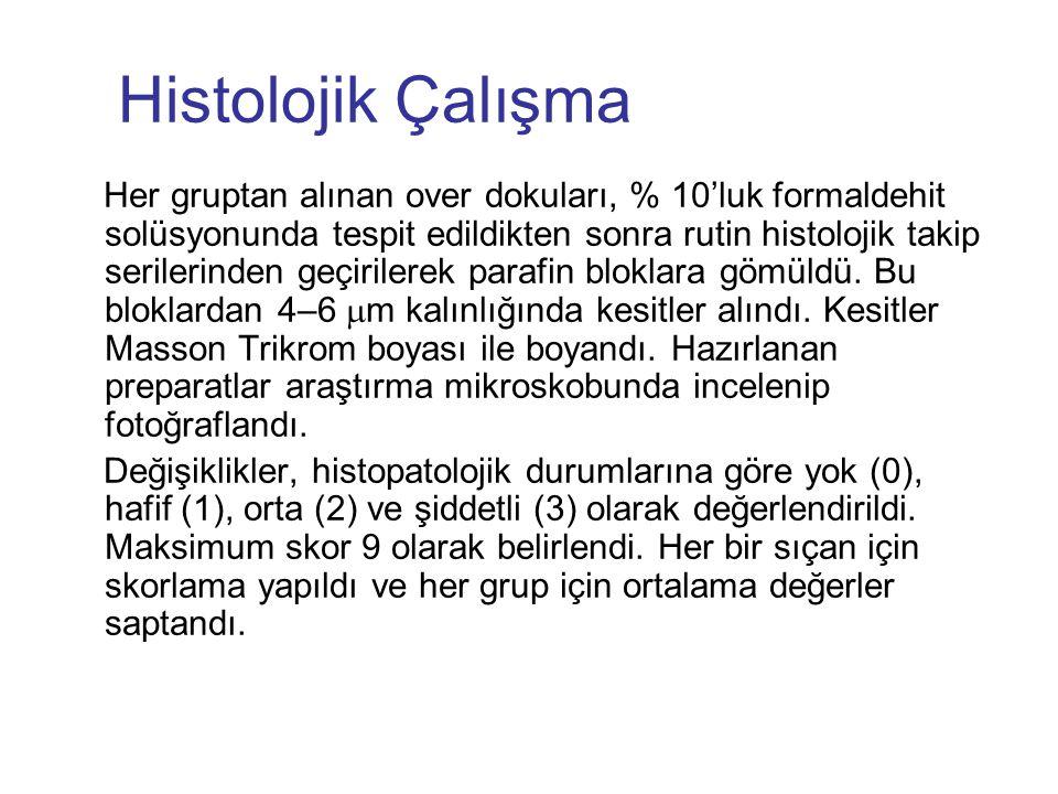 Histolojik Çalışma