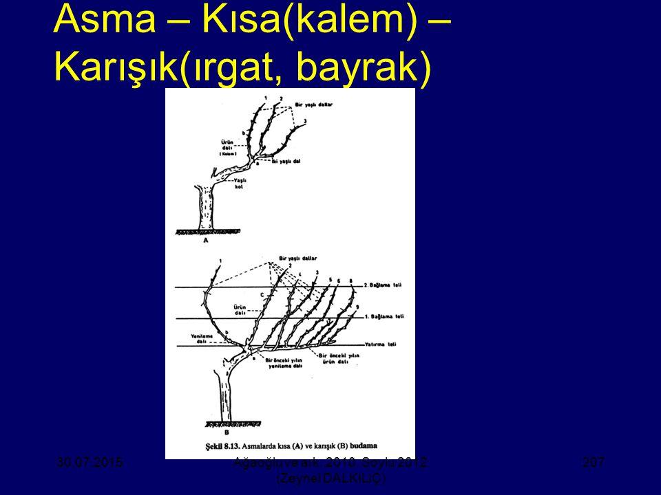 Asma – Kısa(kalem) – Karışık(ırgat, bayrak)