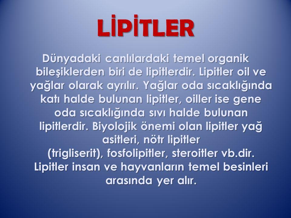 LİPİTLER