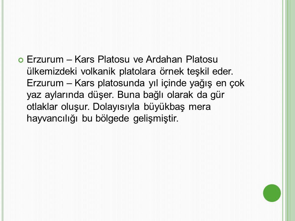 Erzurum – Kars Platosu ve Ardahan Platosu ülkemizdeki volkanik platolara örnek teşkil eder.