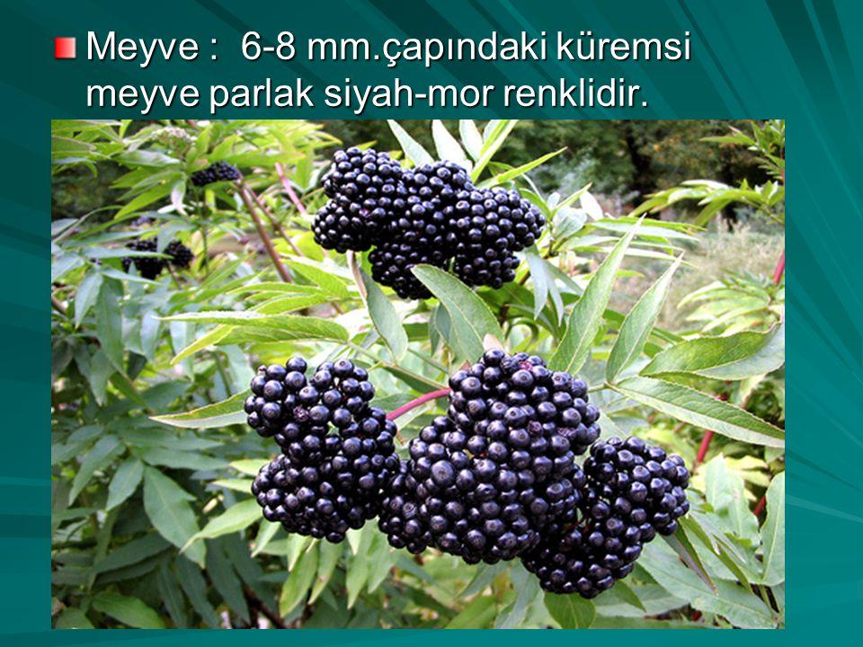 Meyve : 6-8 mm.çapındaki küremsi meyve parlak siyah-mor renklidir.