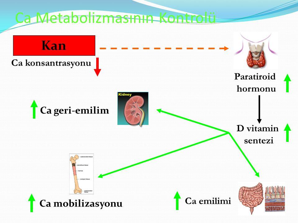 Ca Metabolizmasının Kontrolü