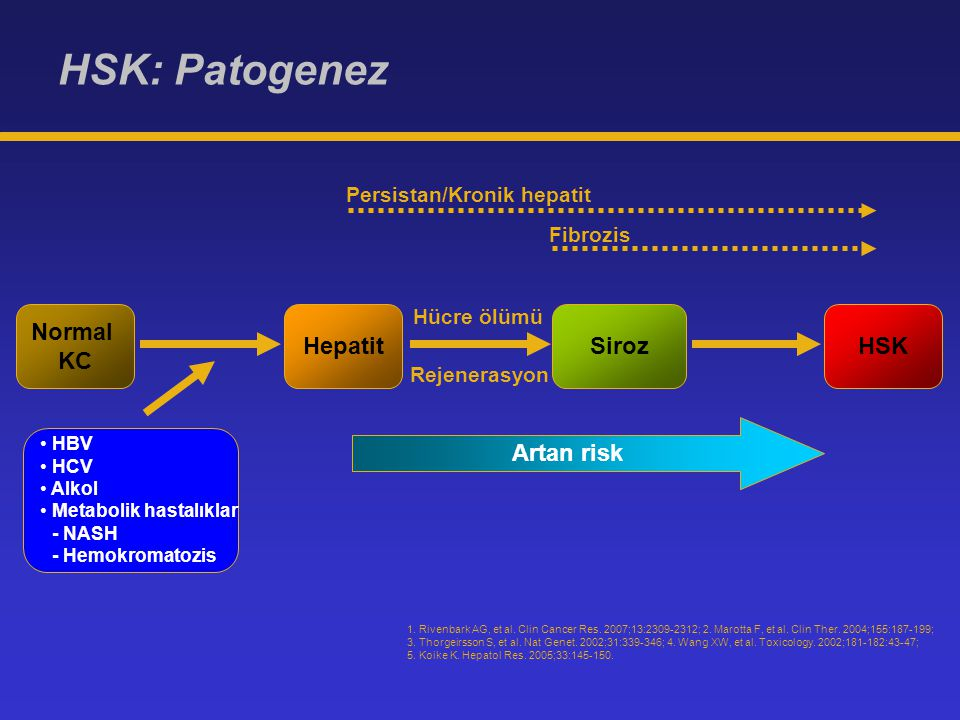 HSK: Patogenez Normal KC Hepatit Siroz HSK Artan risk