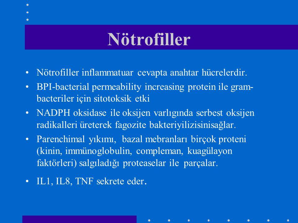 Nötrofiller Nötrofiller inflammatuar cevapta anahtar hücrelerdir.