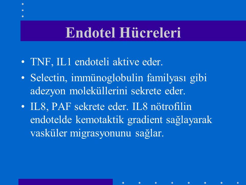 Endotel Hücreleri TNF, IL1 endoteli aktive eder.