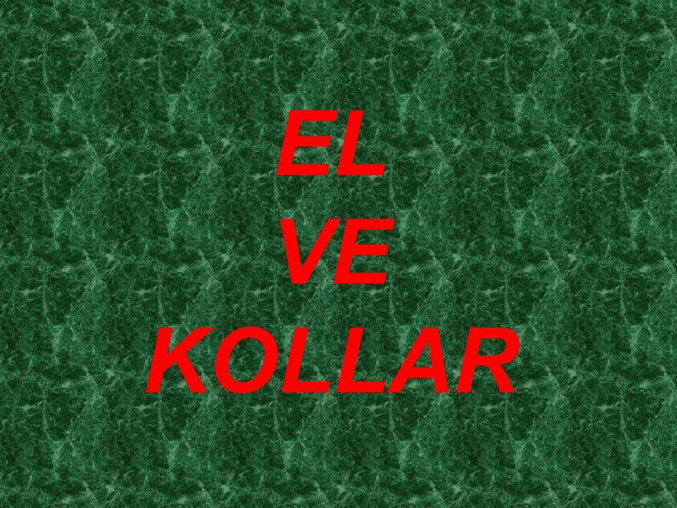 EL VE KOLLAR