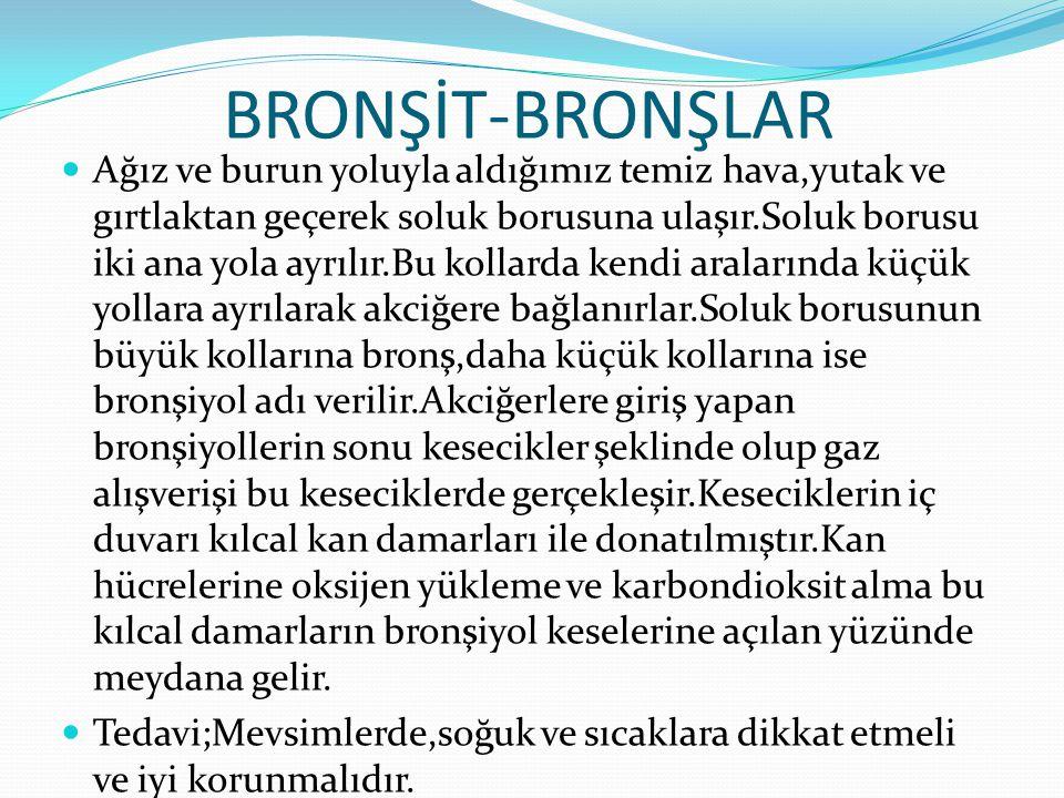 BRONŞİT-BRONŞLAR