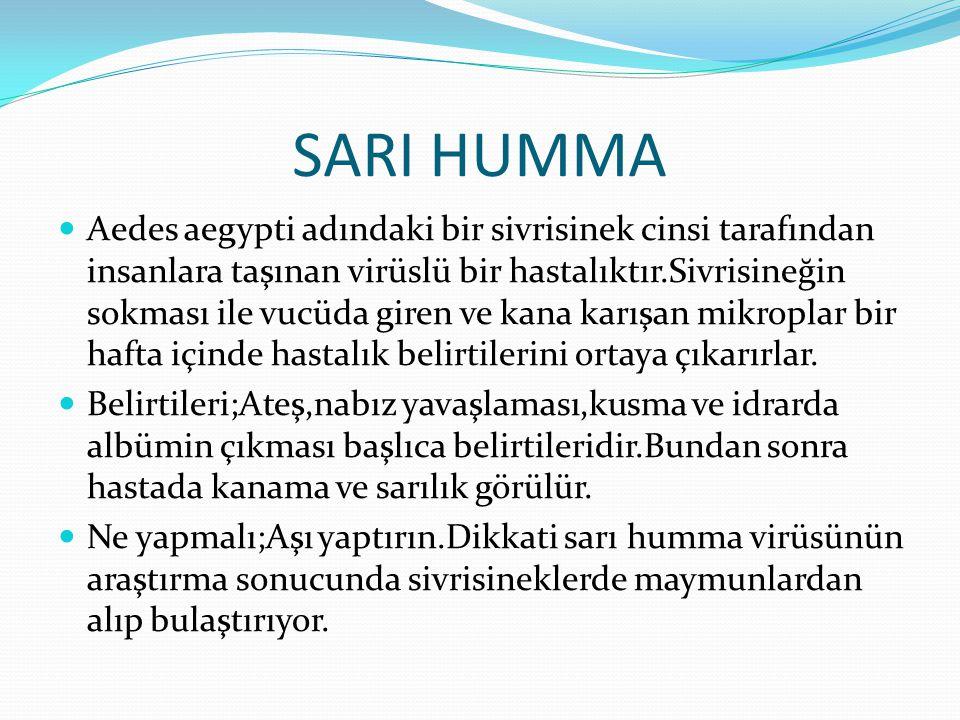 SARI HUMMA