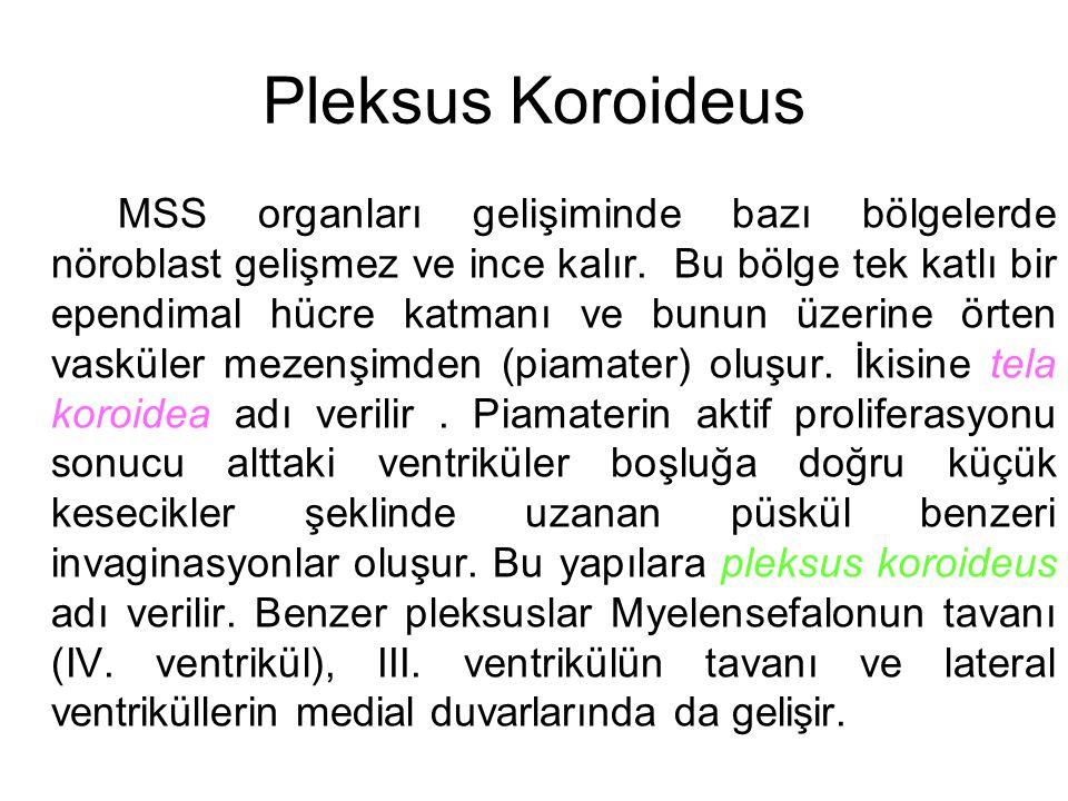 Pleksus Koroideus