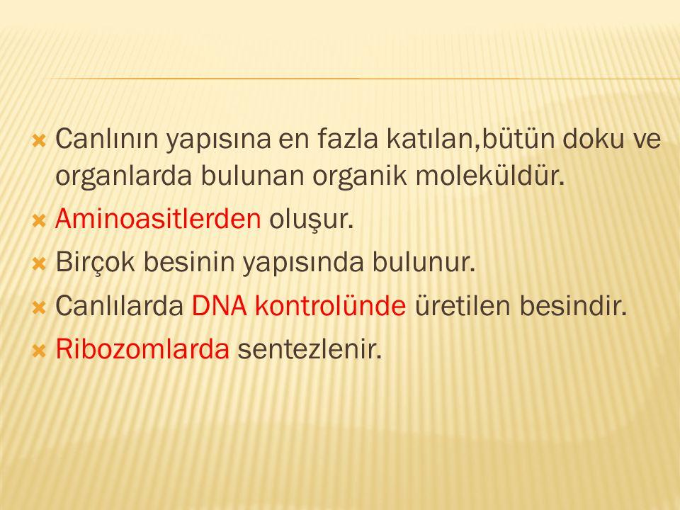 Canlının yapısına en fazla katılan,bütün doku ve organlarda bulunan organik moleküldür.