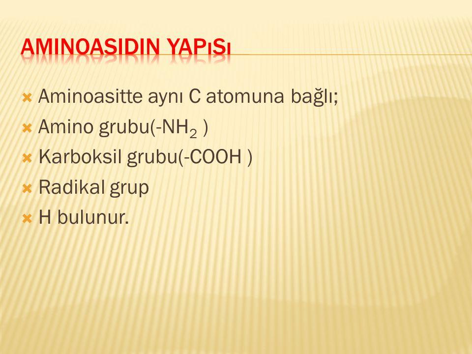 Aminoasidin Yapısı Aminoasitte aynı C atomuna bağlı;