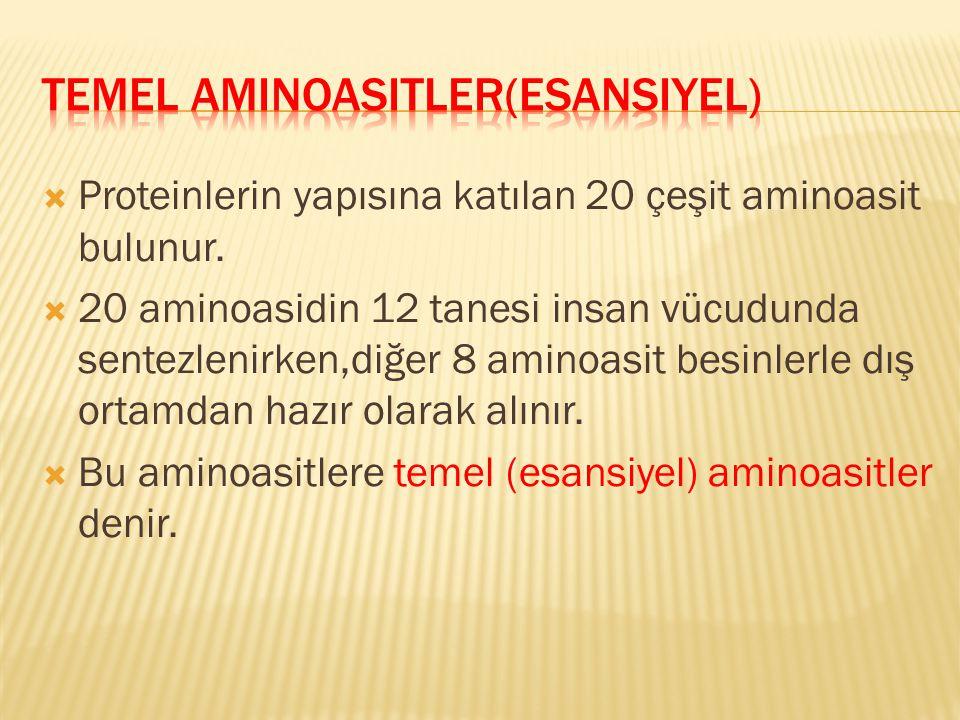 Temel Aminoasitler(Esansiyel)