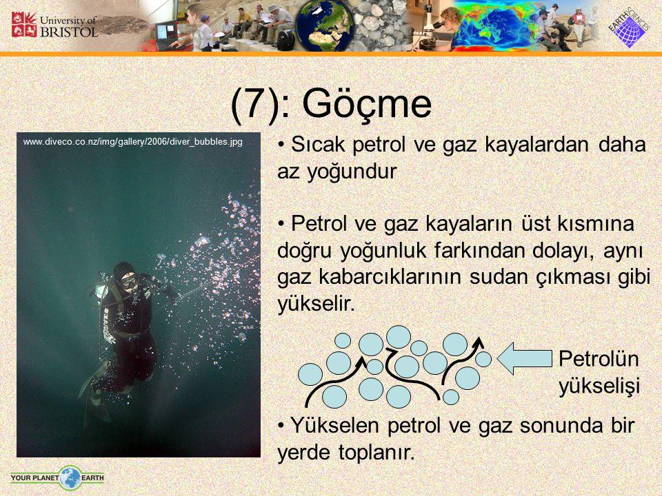(7): Göçme Sıcak petrol ve gaz kayalardan daha az yoğundur