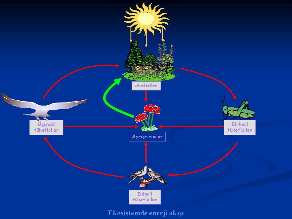 Ekosistemde enerji akışı