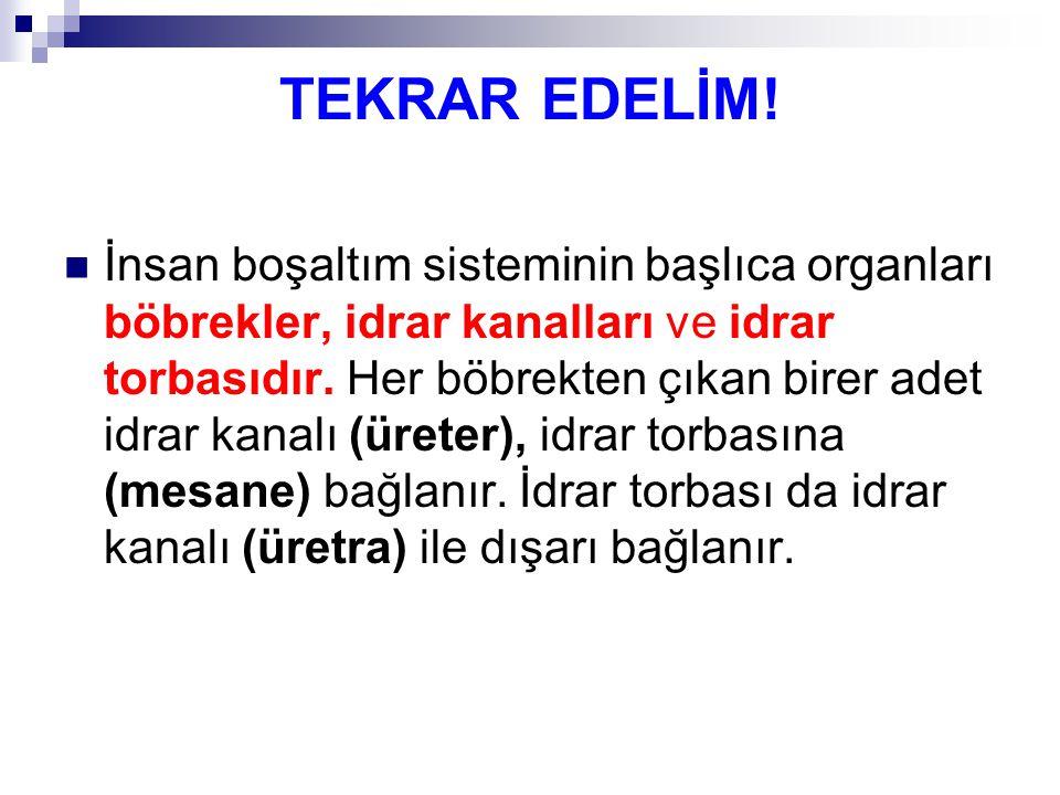 TEKRAR EDELİM!