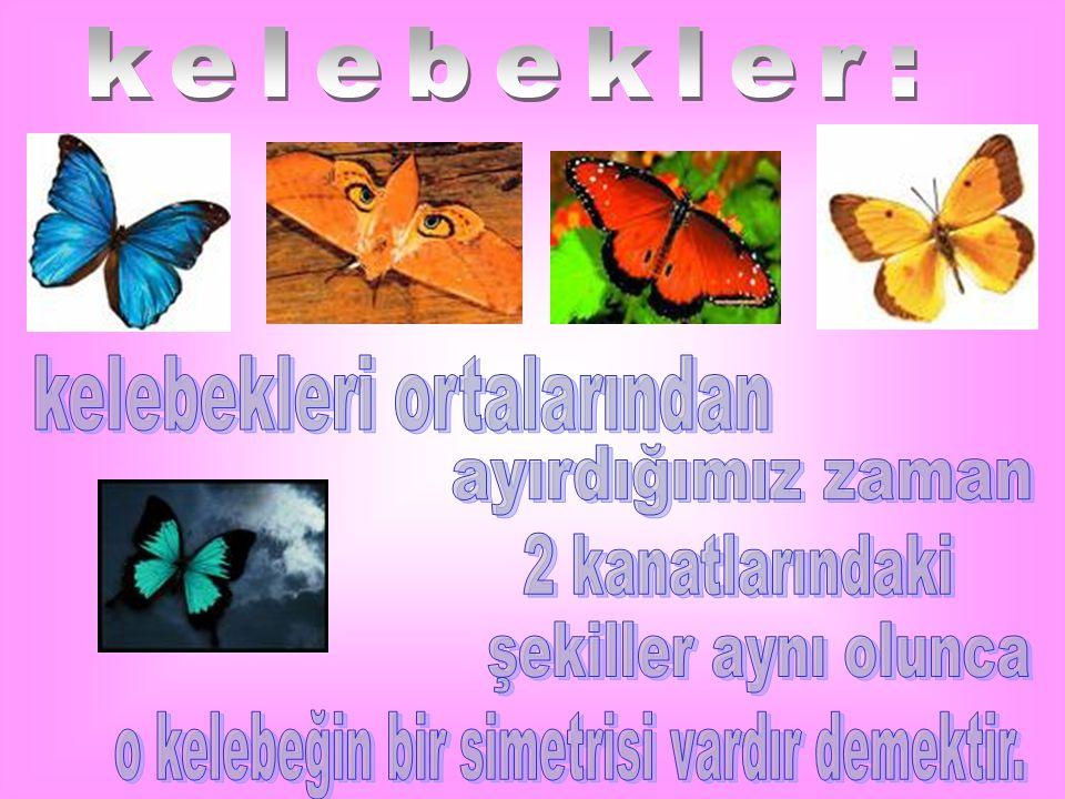 kelebekleri ortalarından