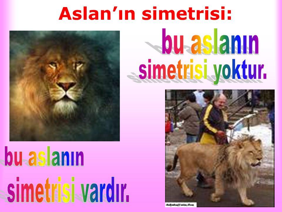 Aslan'ın simetrisi: bu aslanın simetrisi yoktur. bu aslanın