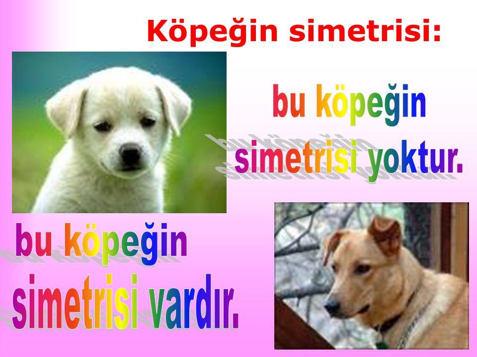Köpeğin simetrisi: bu köpeğin simetrisi yoktur. bu köpeğin