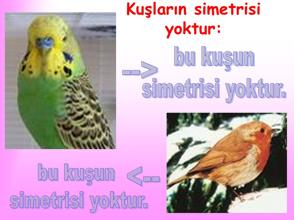 Kuşların simetrisi yoktur: