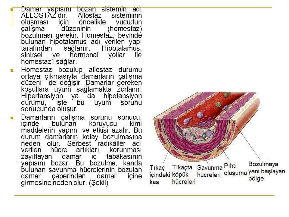 Damar yapısını bozan sistemin adı ALLOSTAZ'dır