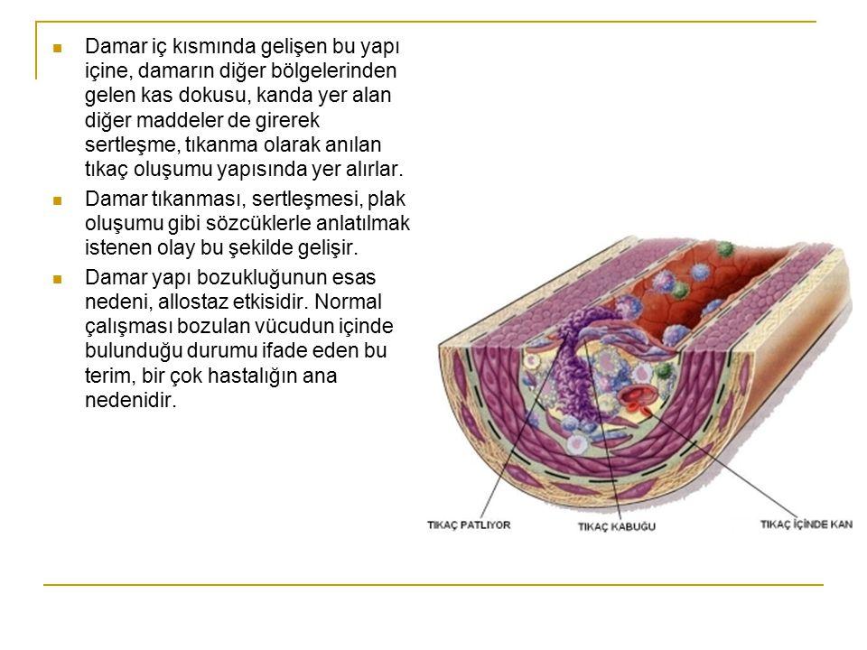 Damar iç kısmında gelişen bu yapı içine, damarın diğer bölgelerinden gelen kas dokusu, kanda yer alan diğer maddeler de girerek sertleşme, tıkanma olarak anılan tıkaç oluşumu yapısında yer alırlar.