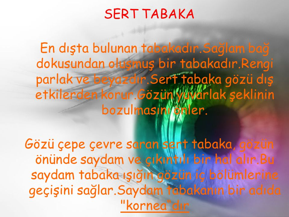 SERT TABAKA
