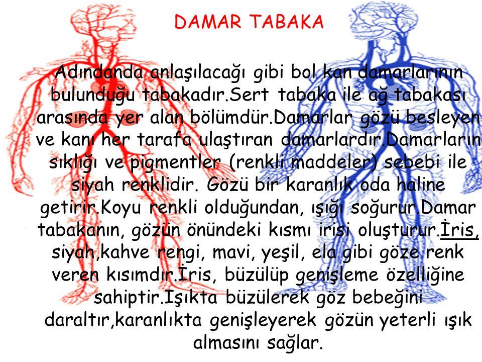 DAMAR TABAKA