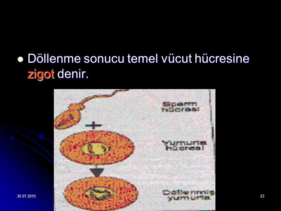 Döllenme sonucu temel vücut hücresine zigot denir.