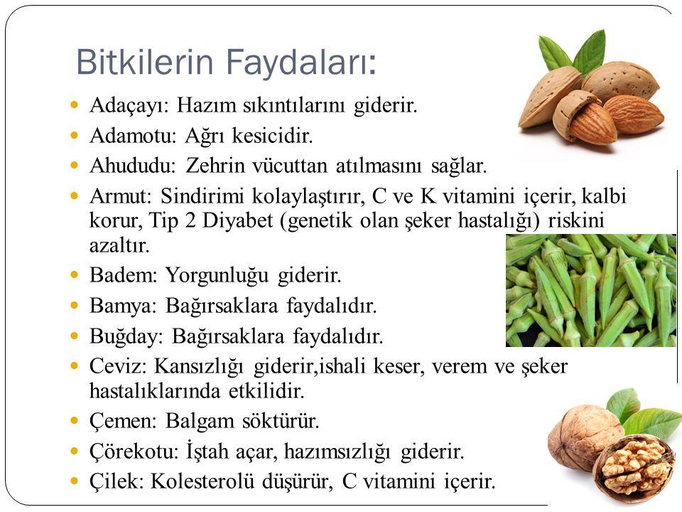Bitkilerin Faydaları: