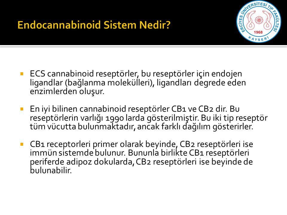 Endocannabinoid Sistem Nedir
