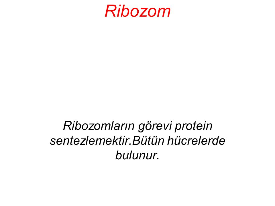 Ribozomların görevi protein sentezlemektir.Bütün hücrelerde bulunur.