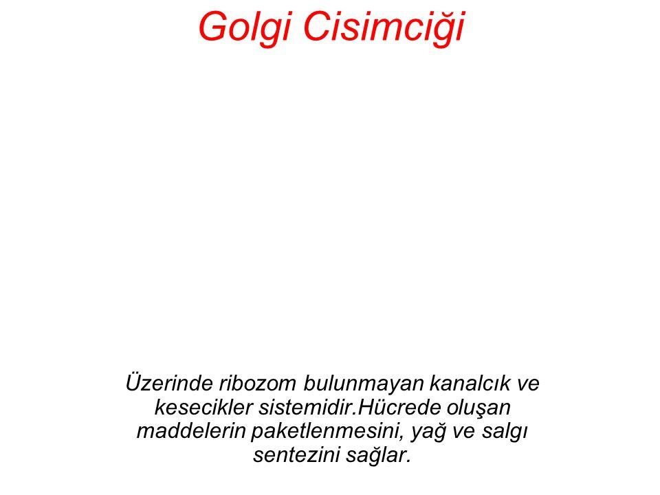 Golgi Cisimciği