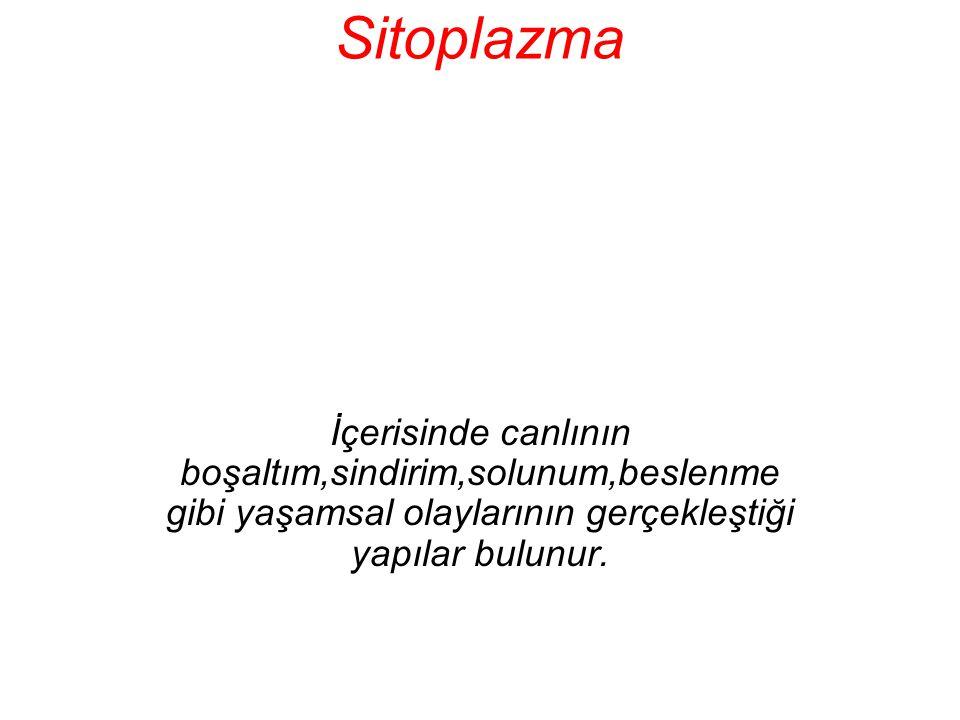 Sitoplazma İçerisinde canlının boşaltım,sindirim,solunum,beslenme gibi yaşamsal olaylarının gerçekleştiği yapılar bulunur.
