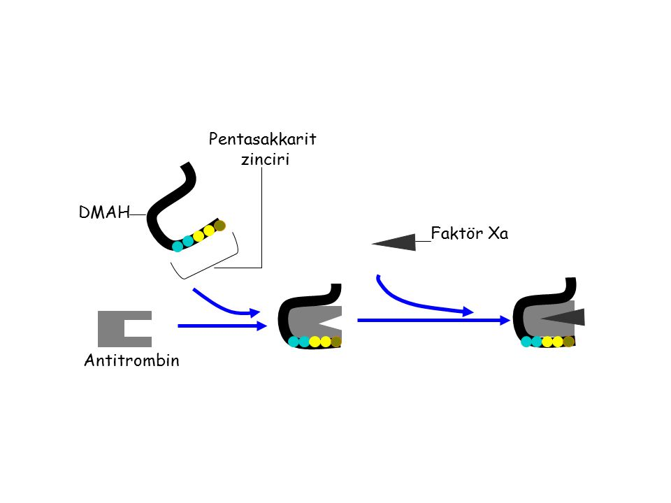 Pentasakkarit zinciri DMAH Faktör Xa Antitrombin